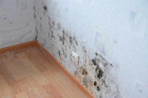 16 способов избавиться от плесени в квартире или доме