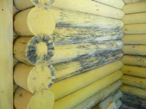 9 советов по выбору средств для защиты древесины от гниения, влаги и возгорания